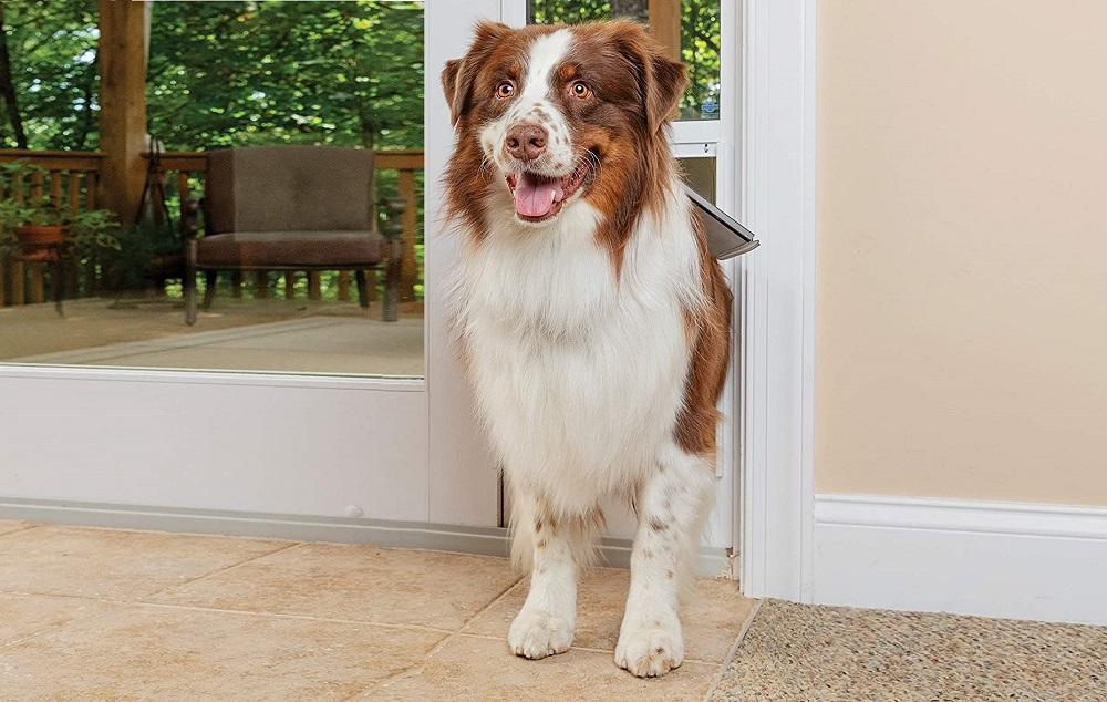 Best Smart Dog Doors